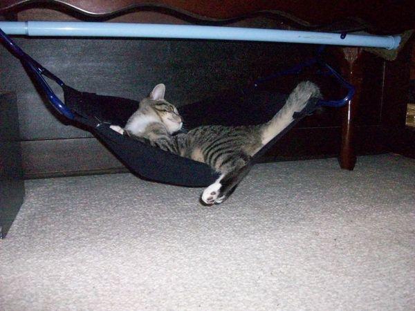 Кроватка для кота своим руками фото 603
