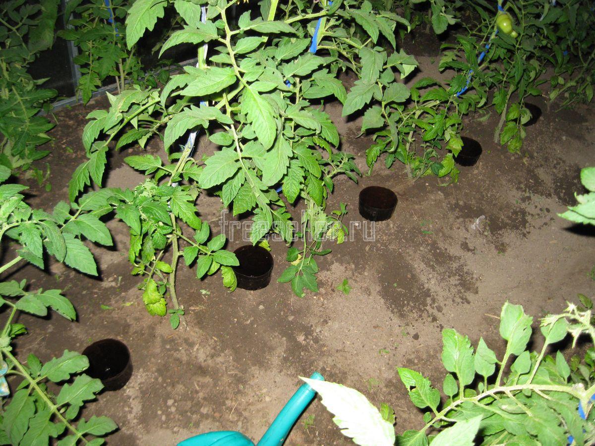 окружен полив томатов через пластиковые бутылки фото виды консервов