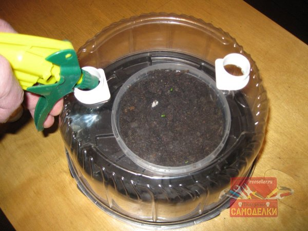 Мини-парник для рассады из коробки от торта полив пулевизатором