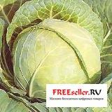 Способы длительного хранения овощей и фруктов