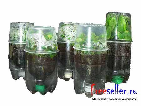 Парник из пластиковых бутылок