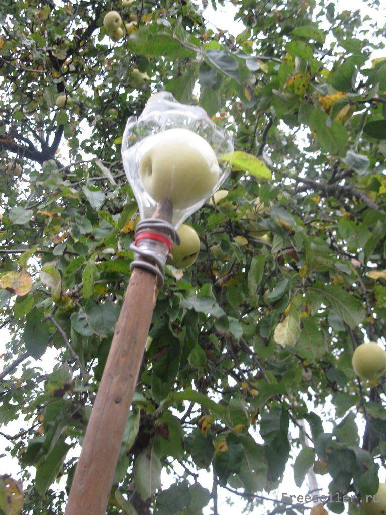 Съёмник для яблок