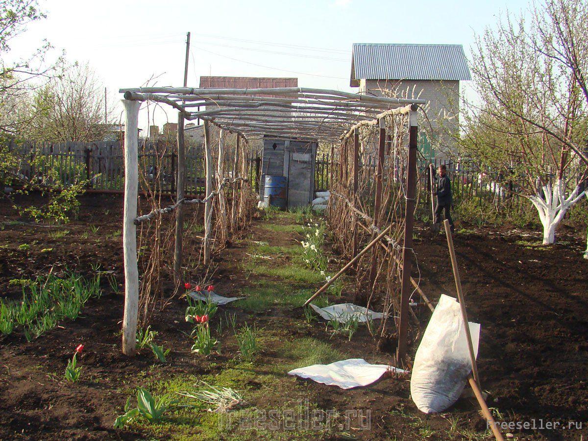 Опоры для винограда своими руками фото на  208