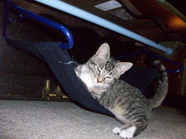 Гамак для кота своими руками