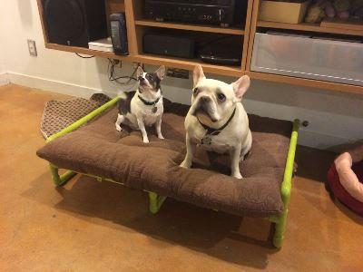 Как сделать королевское место для любимой собаки без больших затрат