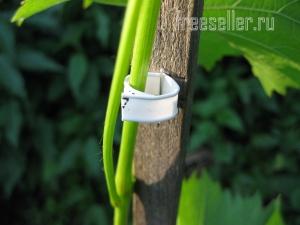 Подвязка растений при помощи хомутов от хлебной упаковки