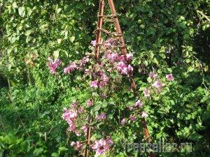 Веревка из коры для декора сада и подвязки растений